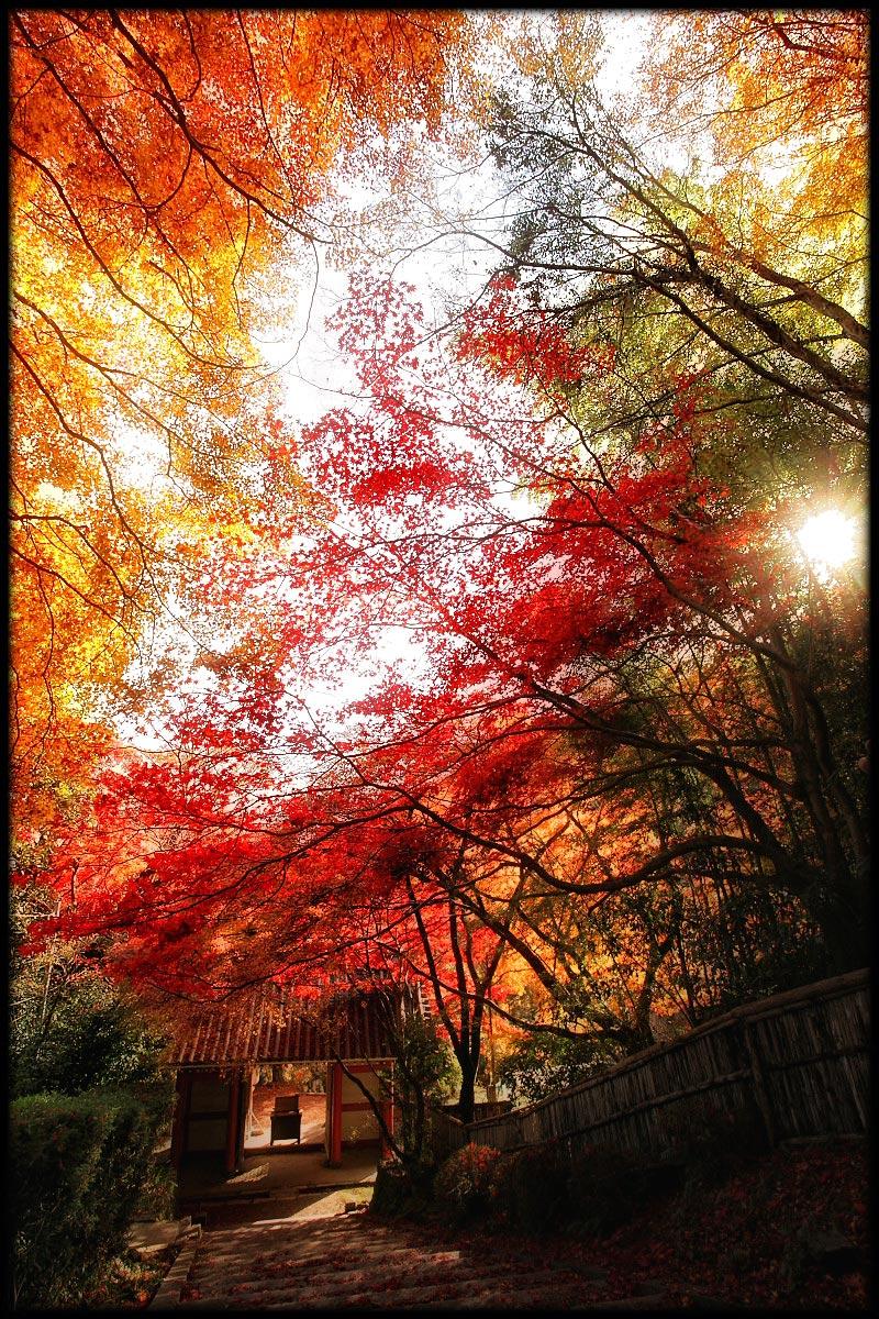 紅葉 2010 <金蔵寺> 2_f0021869_23551545.jpg