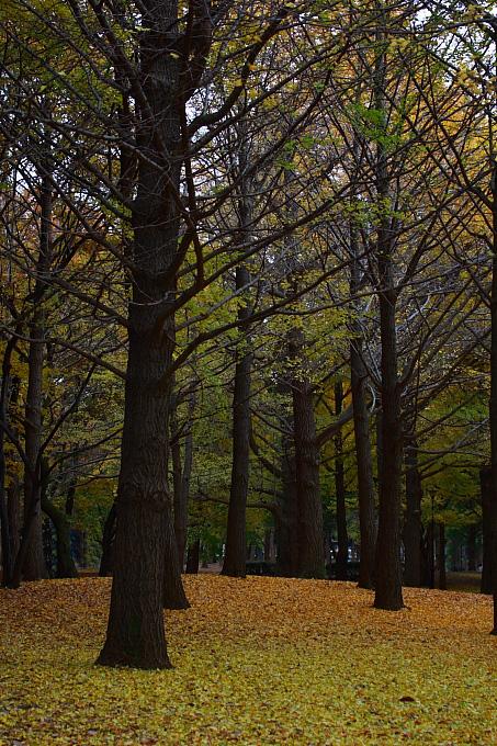 都立野川公園の紅葉 ラスト_e0165983_11164614.jpg