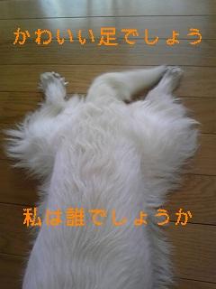 f0017897_19555050.jpg