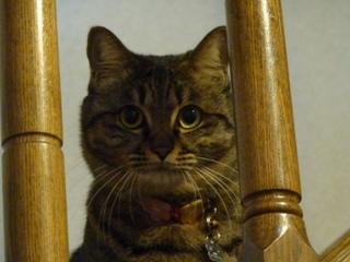 猫のお友だち たまくんsavaちゃんもんさんちゃんちょこちゃん編。_a0143140_2031894.jpg