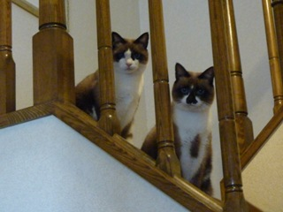 猫のお友だち たまくんsavaちゃんもんさんちゃんちょこちゃん編。_a0143140_2036512.jpg
