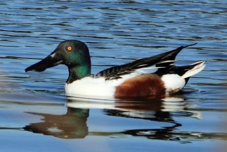 ★先週末の鳥類園(2010.12.4~5)_e0046474_059834.jpg