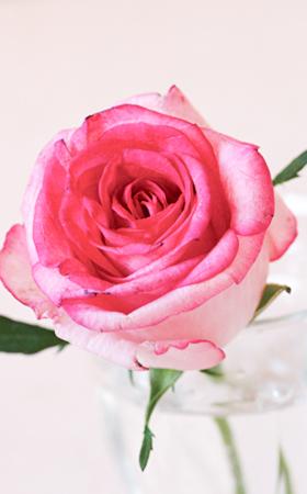ROSE♡_d0158980_15412762.jpg
