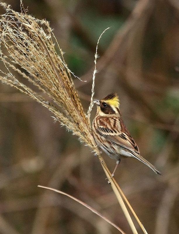 冬の小鳥_d0074828_21372980.jpg