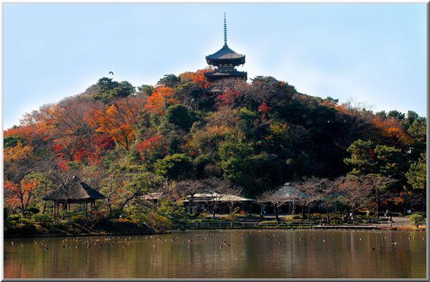 初冬の三渓園(横浜)_d0123528_11525424.jpg