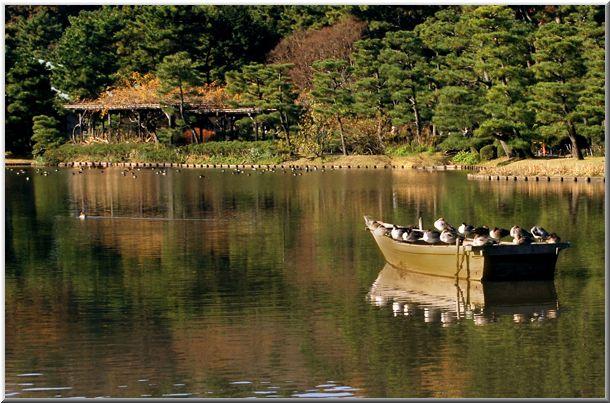 初冬の三渓園(横浜)_d0123528_11575544.jpg