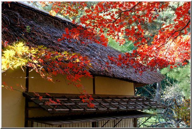 初冬の三渓園(横浜)_d0123528_1223632.jpg
