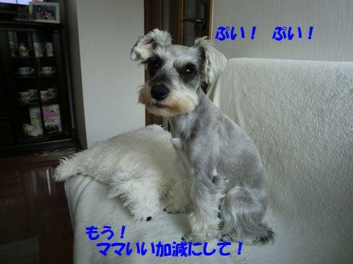 b0206444_14405037.jpg
