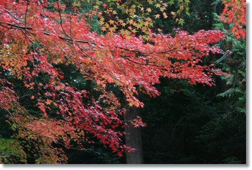 もう1回紅葉を楽しんで_c0049950_1534617.jpg