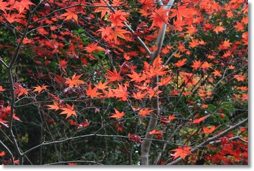 もう1回紅葉を楽しんで_c0049950_1537498.jpg