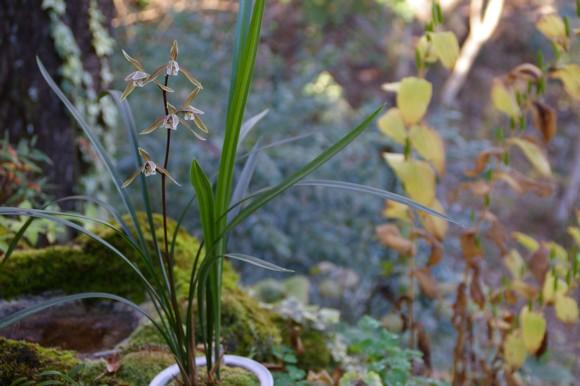 林に蘭を置く_f0043750_22405133.jpg