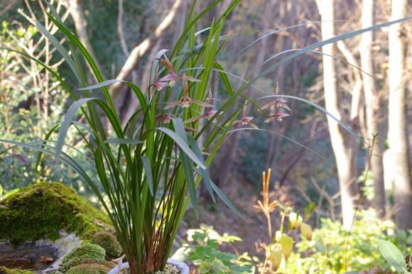 林に蘭を置く_f0043750_2241796.jpg