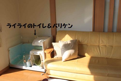 f0181462_8441617.jpg