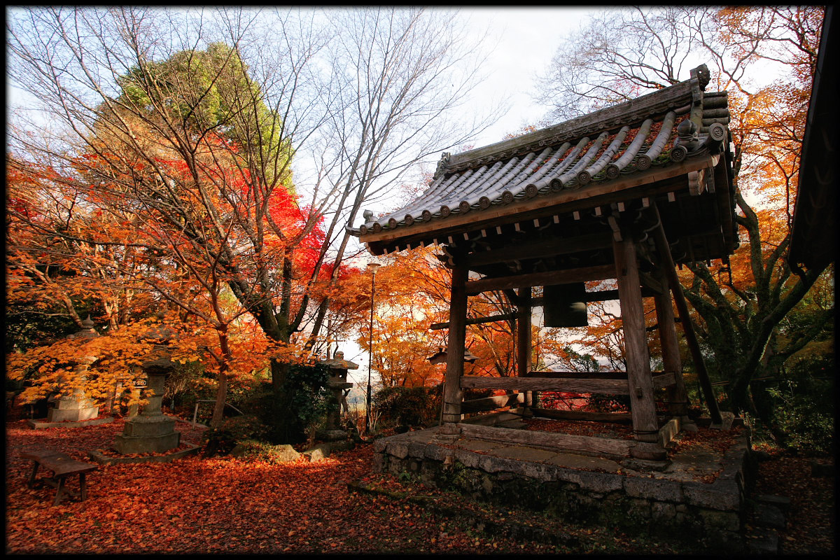 紅葉 2010 <金蔵寺> 4_f0021869_0311020.jpg