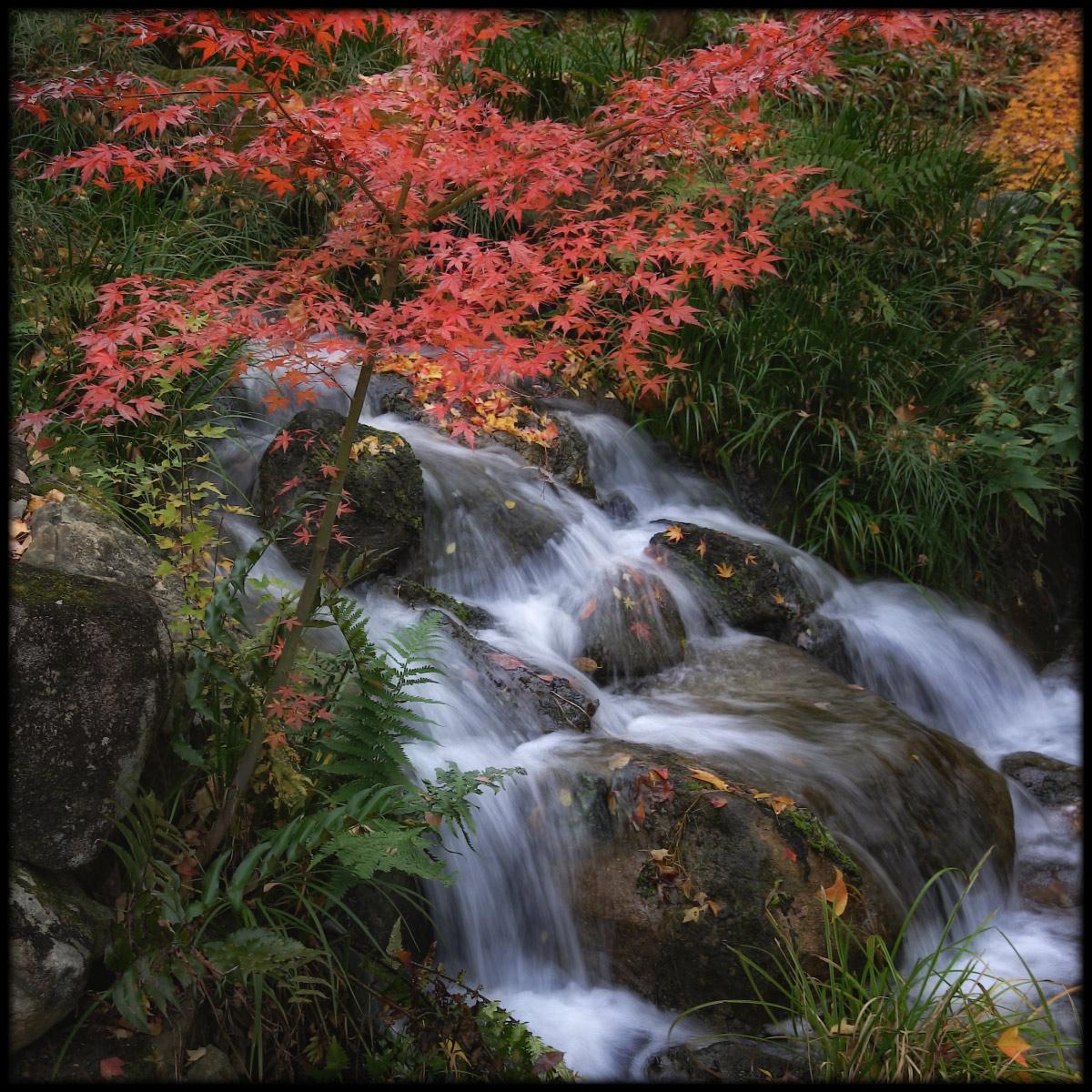 紅葉 2010 <万博記念公園> _f0021869_03324100.jpg