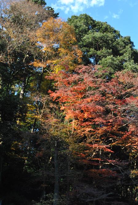 霊山高尾_b0194880_0325647.jpg