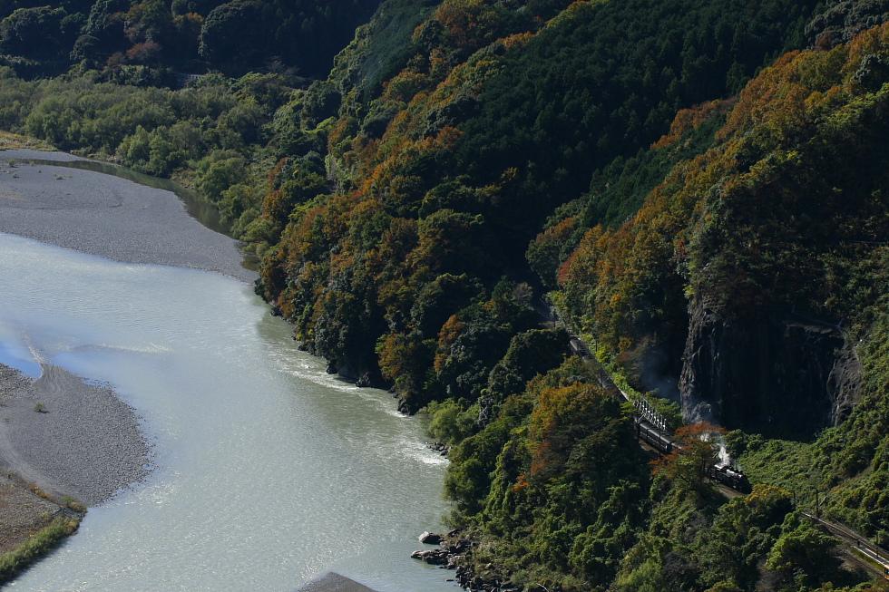 秋の日に輝く罐 - 2010年秋・大井川 -_b0190710_7153473.jpg