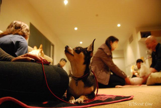 第4回「愛犬の為の整体教室」の模様 その2_c0099133_21133965.jpg