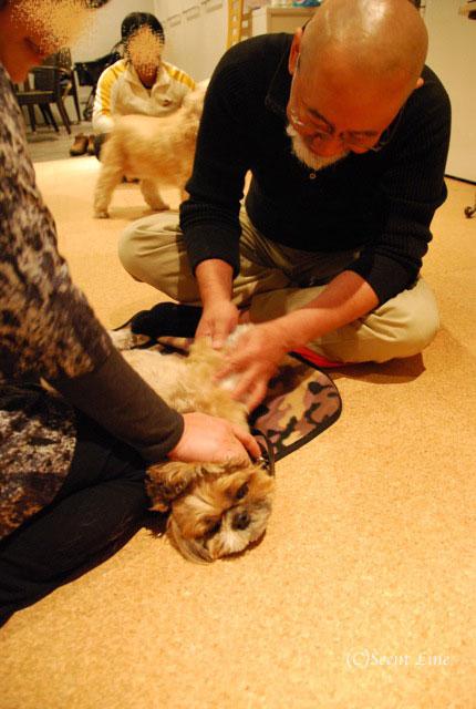 第4回「愛犬の為の整体教室」の模様 その2_c0099133_21143884.jpg