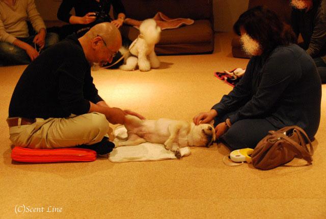 第4回「愛犬の為の整体教室」の模様 その2_c0099133_21154127.jpg