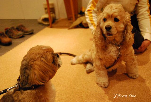第4回「愛犬の為の整体教室」の模様 その2_c0099133_21163314.jpg