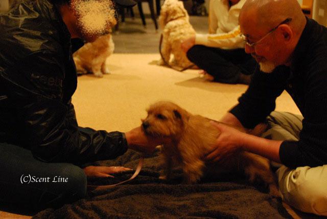 第4回「愛犬の為の整体教室」の模様 その2_c0099133_21165048.jpg