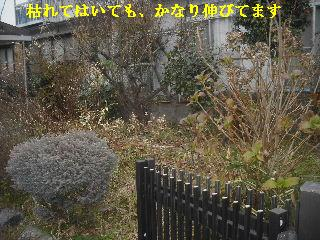 f0031037_1915458.jpg
