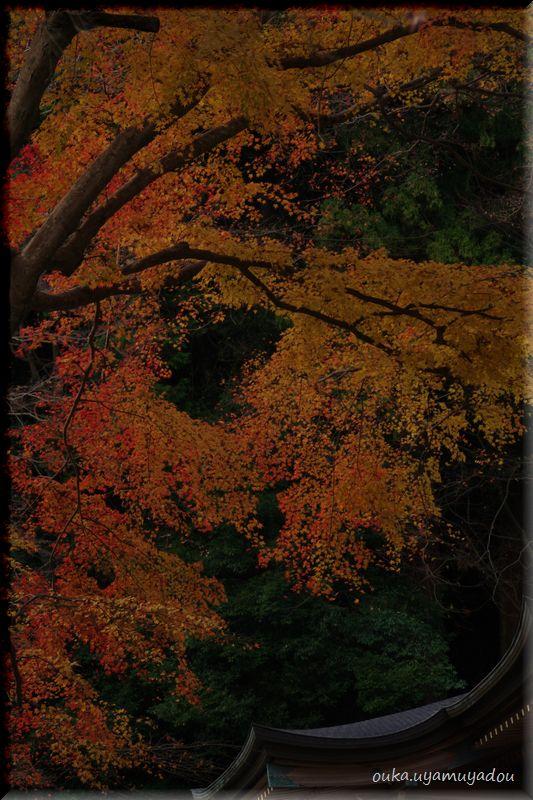 晩秋の長谷寺-2-_a0157263_2314671.jpg