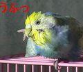 f0196665_234110100.jpg