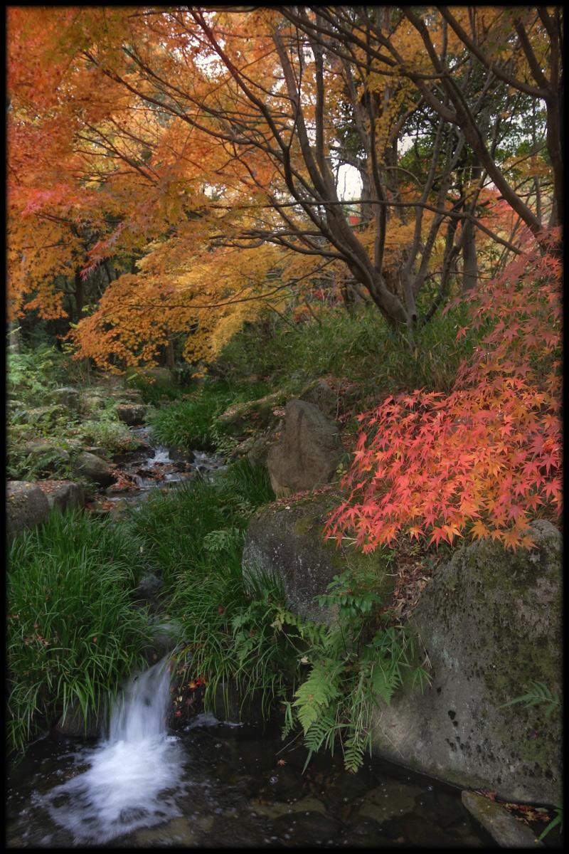 紅葉 2010 <万博記念公園> _f0021869_002788.jpg