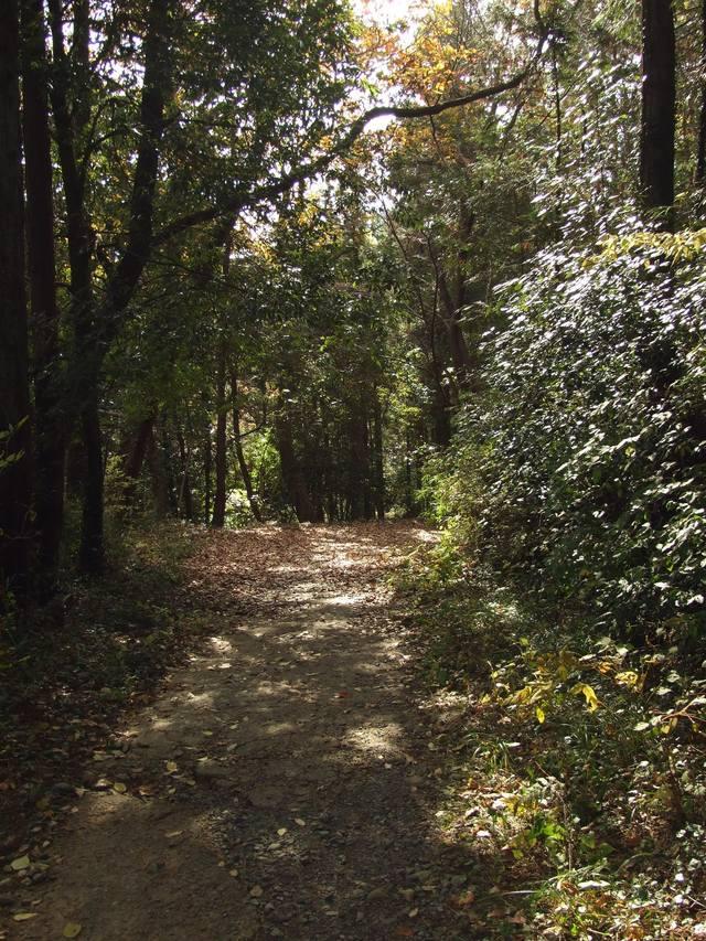 嵐山で小さい秋見つけた_a0106978_1564659.jpg