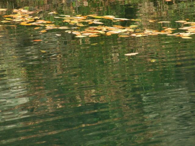 嵐山で小さい秋見つけた_a0106978_1565256.jpg