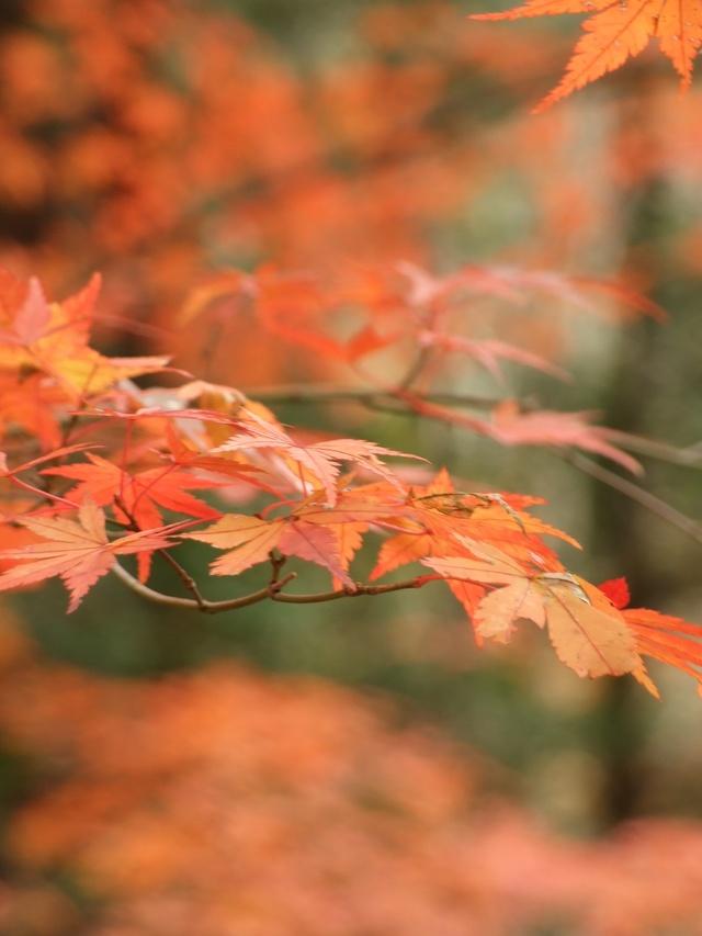 嵐山で小さい秋見つけた_a0106978_157397.jpg