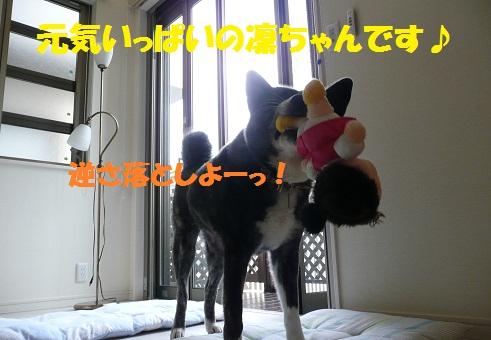 f0121712_8192640.jpg