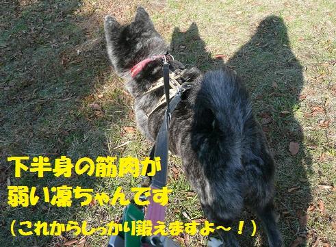 f0121712_840339.jpg