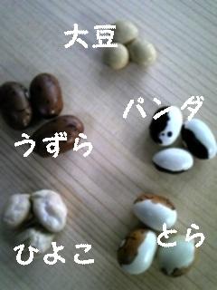 まめ_f0148927_22222929.jpg