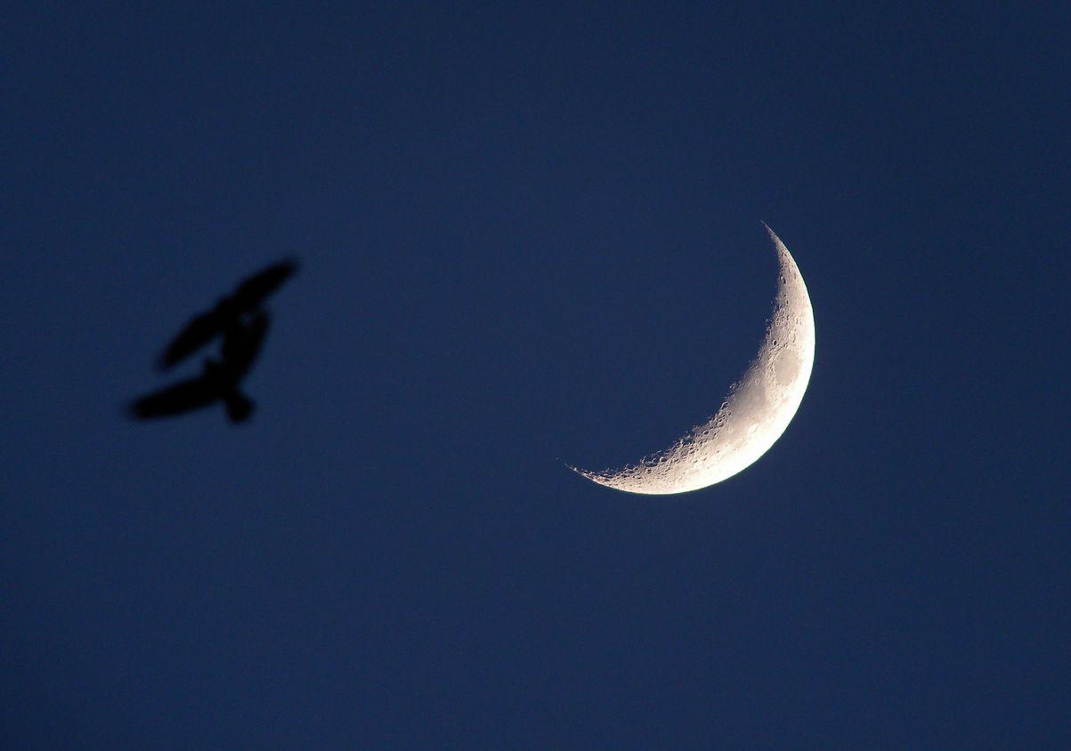 「月に雁」?_e0150433_15205737.jpg