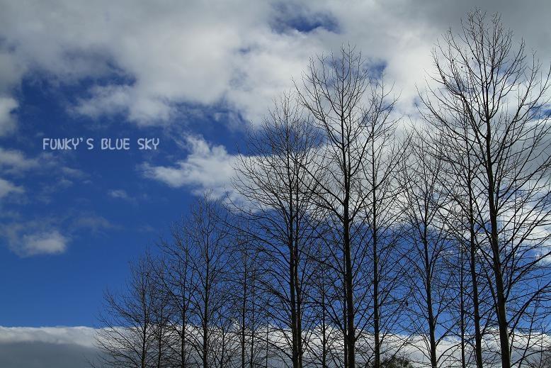 冬の青空_c0145250_17174276.jpg