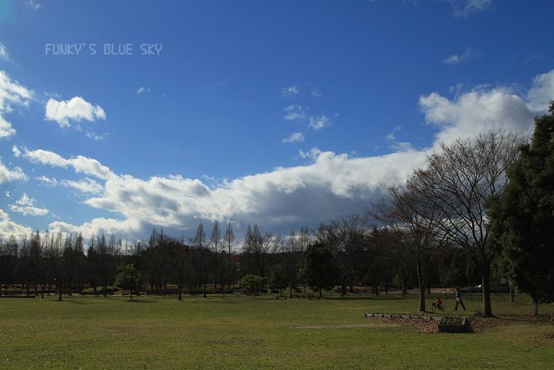 冬の青空_c0145250_17193315.jpg