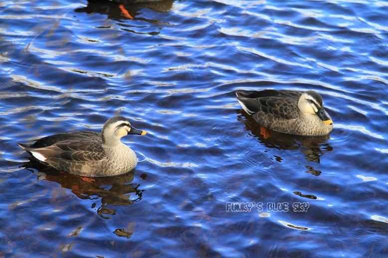 冬の青空_c0145250_1722898.jpg