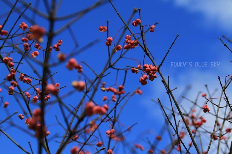 冬の青空_c0145250_17263272.jpg