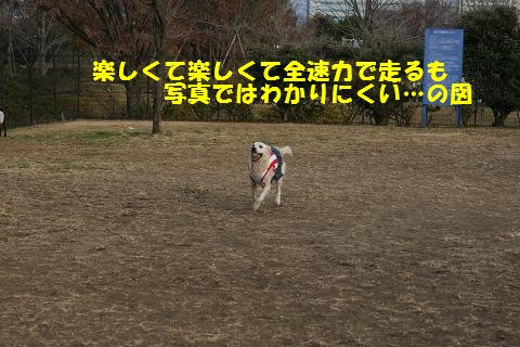 c0214455_1852728.jpg