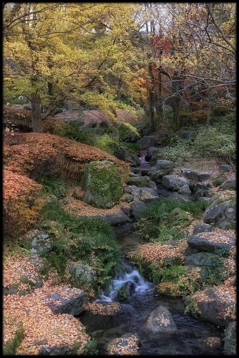 紅葉 2010 <万博記念公園> _f0021869_0144825.jpg