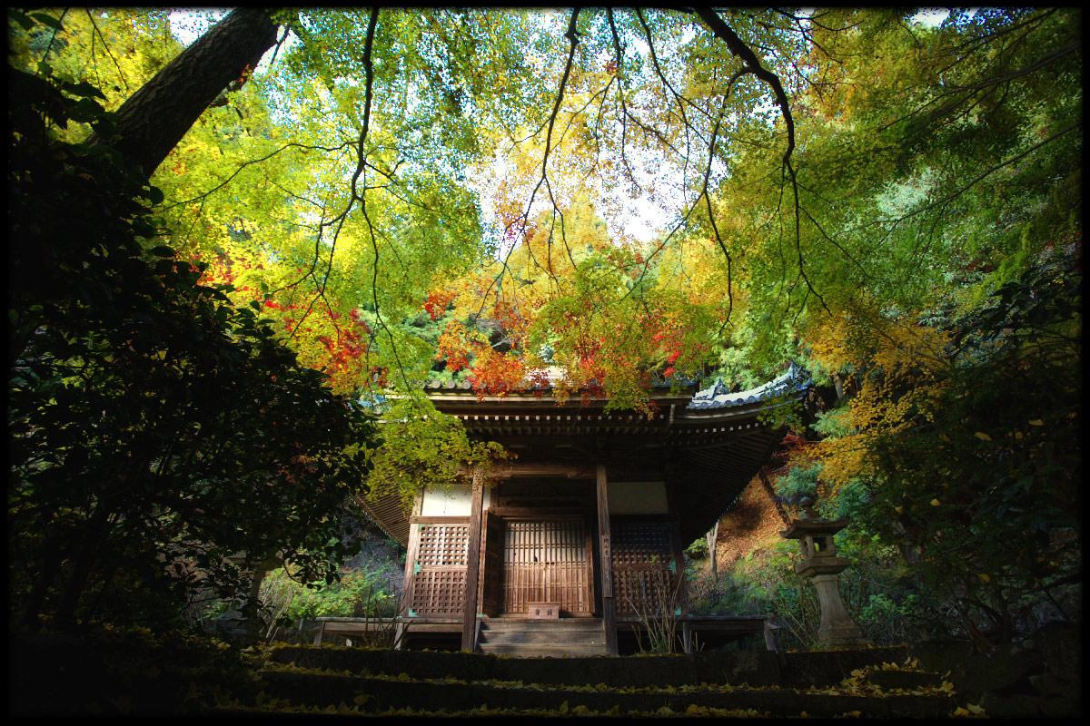 紅葉 2010 <金蔵寺> 6_f0021869_14411053.jpg