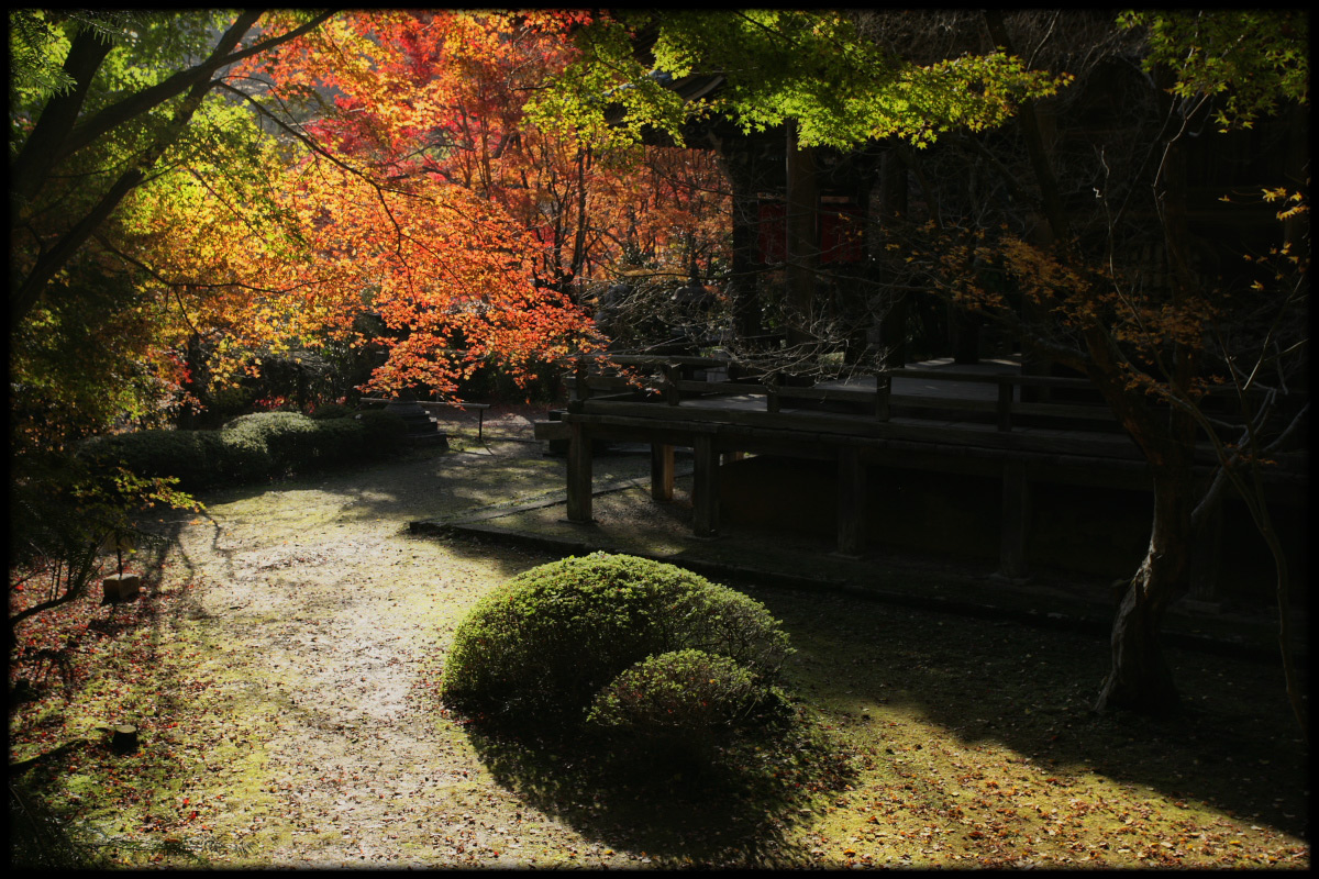 紅葉 2010 <金蔵寺> 6_f0021869_14413379.jpg