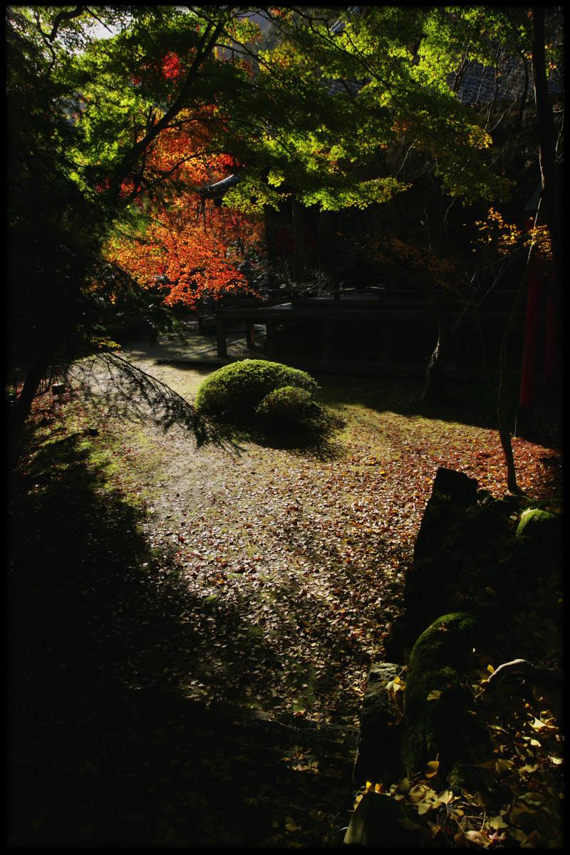 紅葉 2010 <金蔵寺> 6_f0021869_14415618.jpg