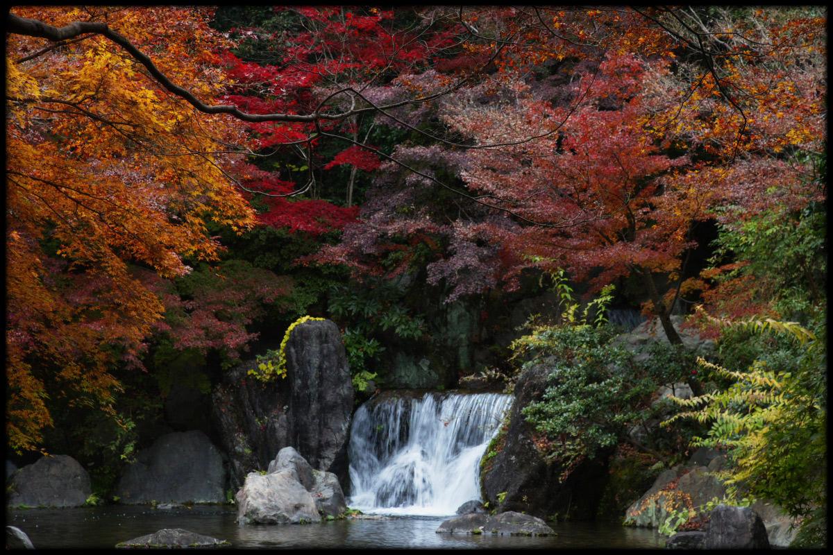 紅葉 2010 <万博記念公園> _f0021869_19574246.jpg