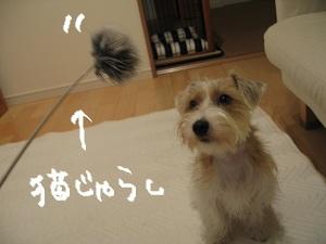 b0092580_0135058.jpg