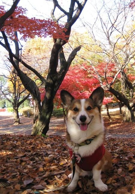 モモチちゃんと紅葉デート~♪ ~紅葉とボク編~_f0155118_11404661.jpg