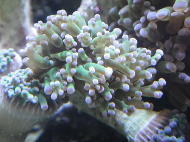 海水魚・サンゴ・水草・淡水魚_f0189122_1328799.jpg